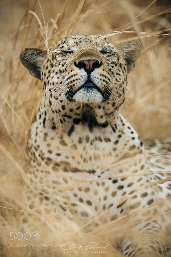 Leopard Love! by schmidchris