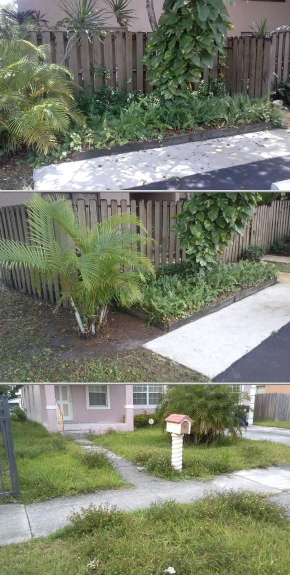 Tree Pruning Cost Estimate 56 Images 17 Best Ideas