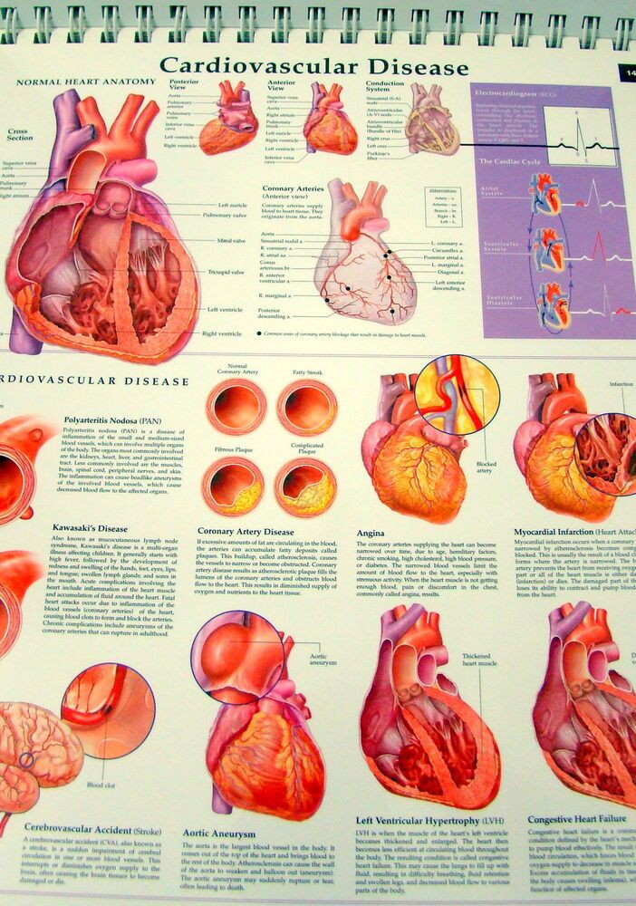 Classic Anthology of Anatomical Charts Vol  2 ONLY Spiral