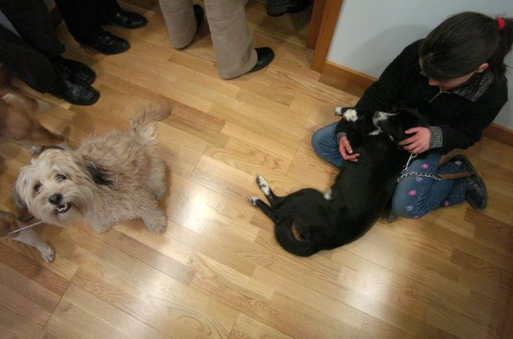 PEDRO HITOMI OSERA: Associações de defesa animal pedem redução do IVA ...