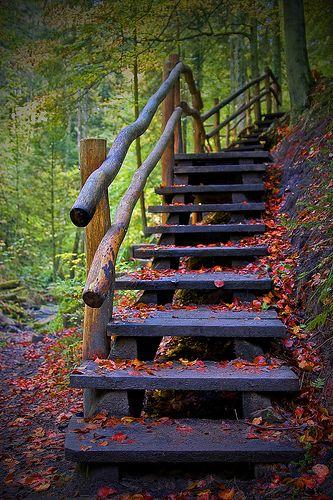 There are times when life calls out for a change by Evelyn Arthur Richman, via Flickr....(these would be nice leading from cabin to forest)