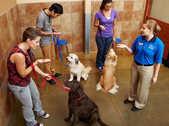 PetSmart's dog training classes are structured by age and skill level, so the course you choose will fit both your needs & your dog's developmental stage. #dogtraining