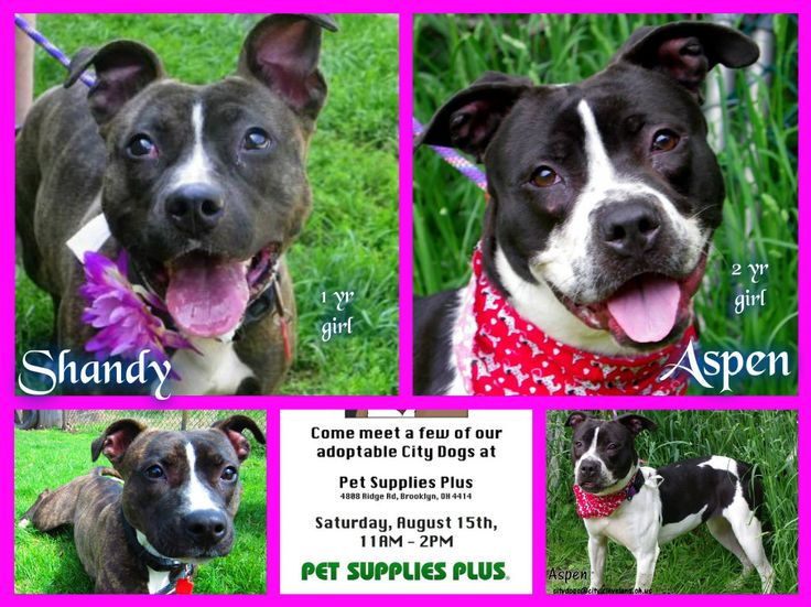 Shandy And Aspen Http Petango Com Cacc Cleveland Oh Email Citydogs City Cleveland Oh Us 216 664 3476 City Dog Pet Supplies Plus Pets