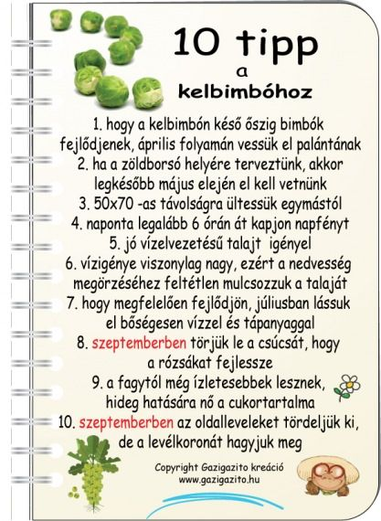 Bimbóskel - gazigazito.hu