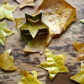 Make stars from fallen leaves, easy to do with all kinds of décor and crafting possibilities!