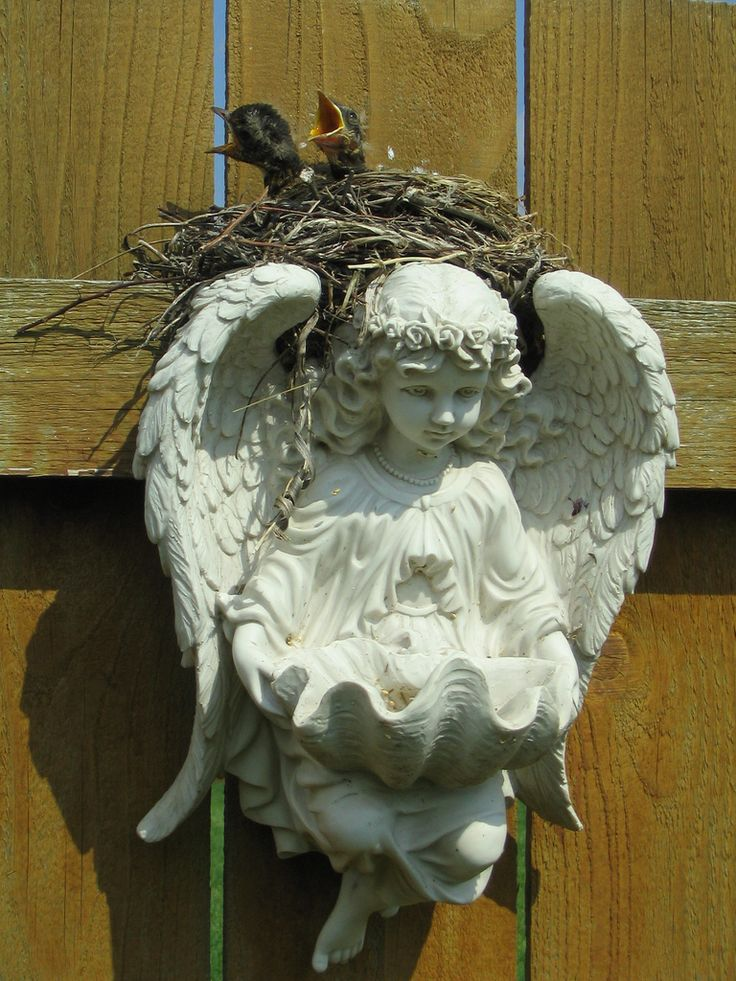 On Angel's wings~~<3~~Look at the nest above the Angels head resting between its wings