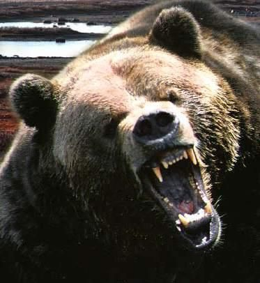 Bears= the most TERRIFYING animal on the planet. Period.
