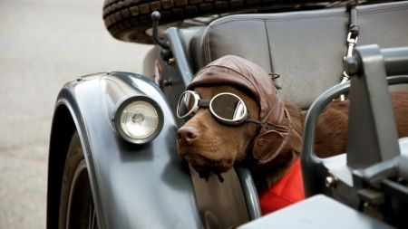 25 Beautiful Cute Dog Wallpaper Ideas On Pinterest Pug