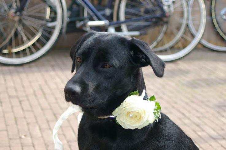 hond ringen brengen bruiloft - Google zoeken