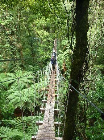 Rotorua Canopy Tours - Rotorua, New Zealand...I should have done this while I was in rotorua
