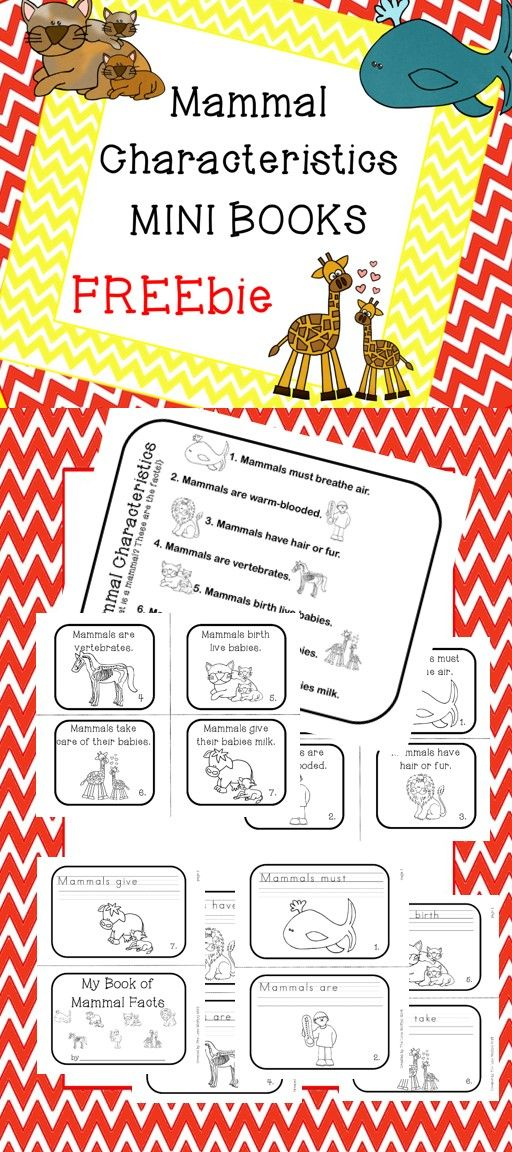 Mammal Characteristics Freebie!  What makes a mammal a mammal?  Find out with this fun FREEbie!  Included: Mammal Characteristics Fact Sheet and two Mini Books (differentiated levels.)  There is also a complete pack that includes: posters, puzzles, games, flash cards, printables, writing prompts, informational text with comprehension checks assessments and more! The Complete Mammal Characteristics Fact Pack includes more than 60 pages for only $5.00!