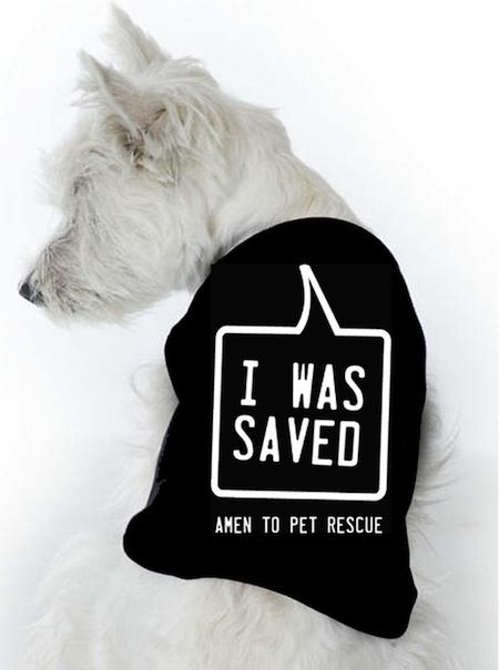 Great products from My Animal Activist: Rescue Dogs, Animal Shelters, Animal Activists, Pet Rescue, Pet Girls, Cute Pet, Baby Girls, Pet Boys, Pet Stores
