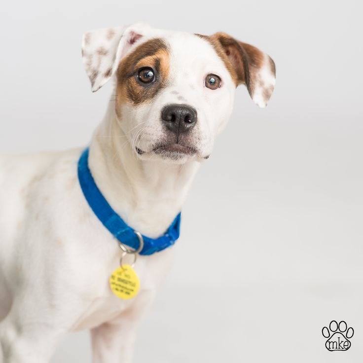 Wisconsin Humane Society Adoptable Dogs