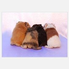 Cute Baby Guinea Pig Butts for