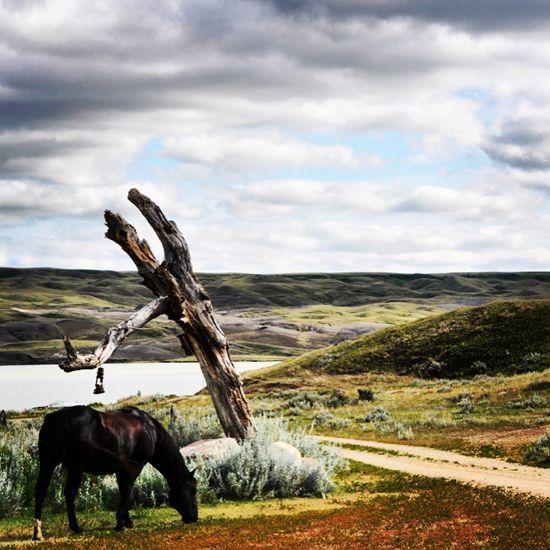 Home on the range at La Reata Ranch in Saskatchewan.