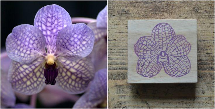 La Fabutineuse: impressions botaniques
