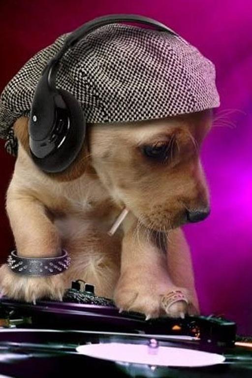 DJ Dog. #djculture #dj #djdog http://www.pinterest.com/TheHitman14/dj-culture-vinyl-fantasy/