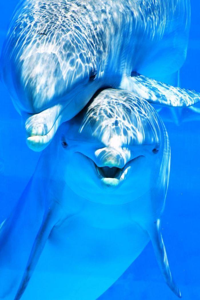 fond marin, deux dauphins souriants