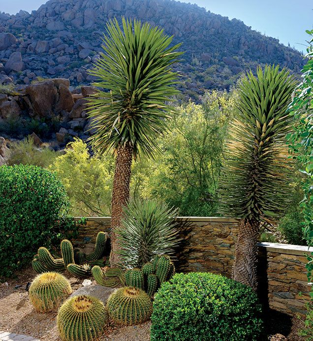 A Picturesque View Of Pinnacle Peak Sets The Stage For A Lush Landscape To Flourish Jardines Deserticos Jardines Jardines Modernos