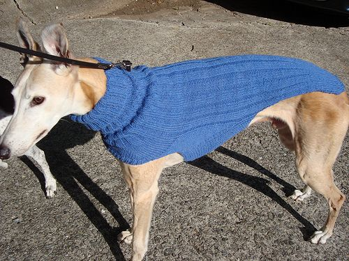 20 best For Sarahs Greyhound images on Pinterest Greyhounds, Animals a...