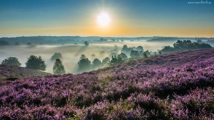 Łąki, Wzgórza, Mgła, Wrzosy, Wschód, Słońca