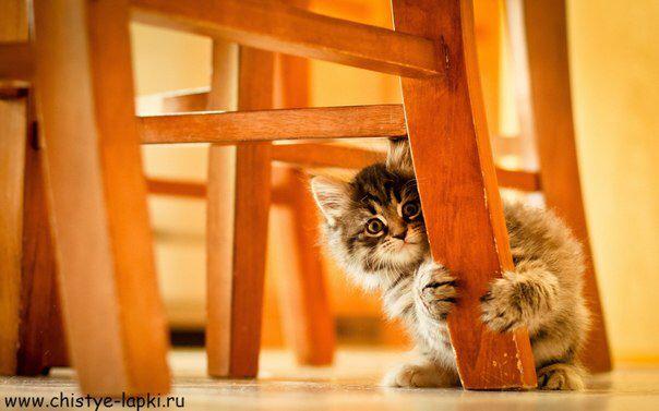 """[Анекдот]   Сын говорит папе: — Папа, посмотри какую я тут картину нарисовал. Называется """"Кот в сапогах"""".  Папа говорит: — Странно, сапоги я вижу. А где же Кот? А сын ему отвечает: — Ну как где? Я же говорю — в сапогах!   #наполнитель #кошка #кот #котэ #кошки #животные #Наполнитель_Чистые_Лапки #Чистота #Комфорт #Экология #Лапушки #сколько_кошек_в_мире #москва #мир #россия #москва #питер #петербург #утро"""