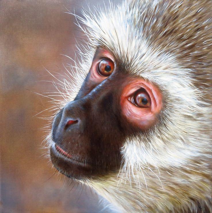 AT A GLANCE- Vervet monkey, oil on canvas, 50x50
