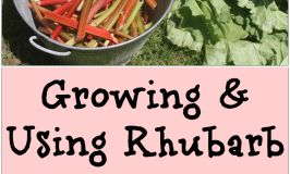 Make the most of one of spring's first edible fruits with this guide to growing & using rhubarb. Spicy rhubarb jam
