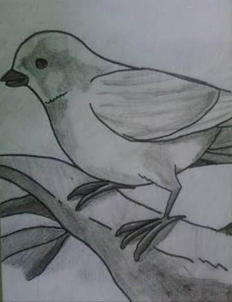 Lapiz Facil Aves Para Dibujar Wwwimagenesmycom
