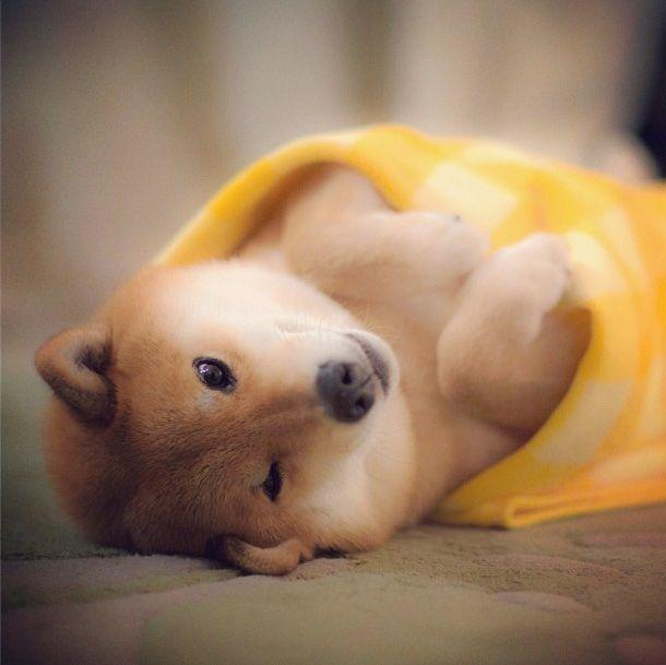 Одежда для собак  купить в интернетмагазине Продажа