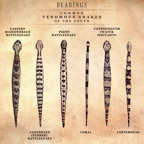 Identifying Poisonous Snakes  >yes I have all these around here! been looking for a pictured description of each! Thx