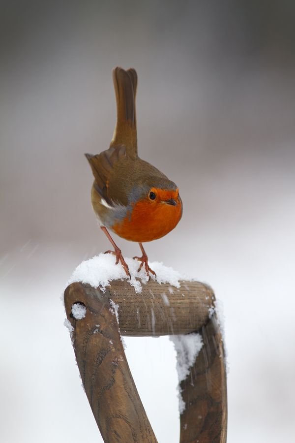 """Snow Dance"" by Simon Roy"