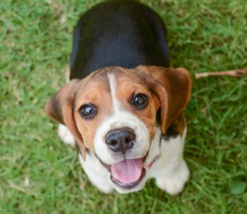 Some Dog Seizures Can Be Serious Puppy Sitting Dogs Dog Breeds