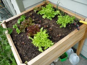 6 Tips for Building Soil for Your Raised Garden Beds and Planters - eartheasy.com