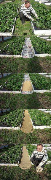Как сделать, чтобы в проходах трава не росла