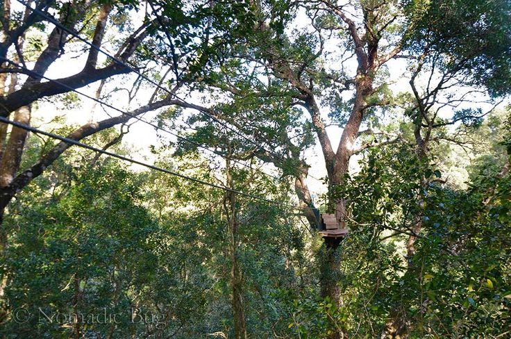 Canopy ZIPLINE, The Tsitsikamma Canopy tours, Garden Route, South Africa Nomadic Existence