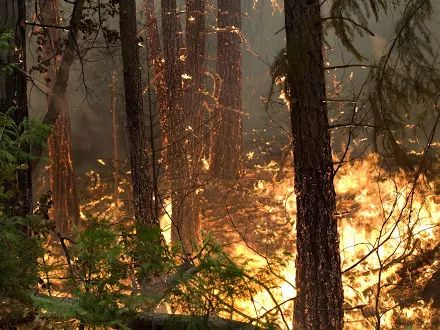 17 Best images about FIREWATCH on Pinterest   National forest ...