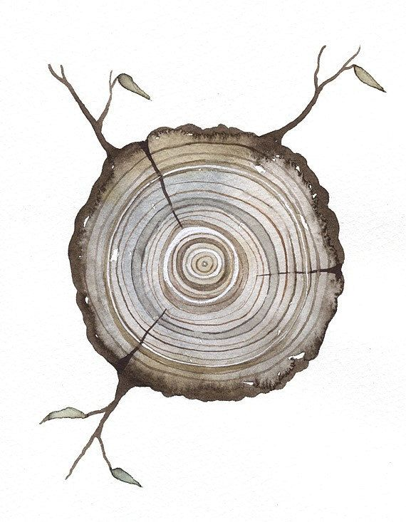 Print Fine Art Illustration - Log tree rings - (8 x 10) Original Watercolor Painting by Lorisworld - Limited edition