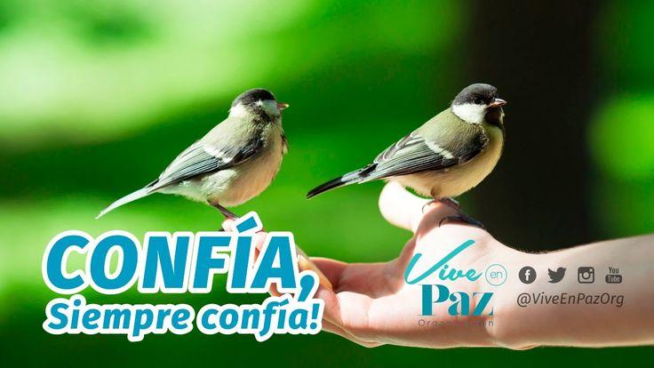 Confía, siempre CONFÍA | Vive en Paz Org - Erwin Griego Pizarro - YouTube