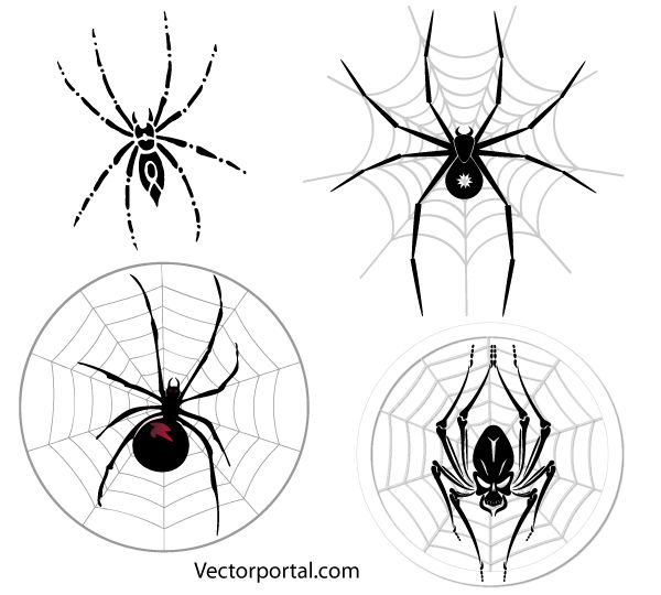 Free Spider Web Vector Images