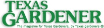 Article on growing various squash in TX.