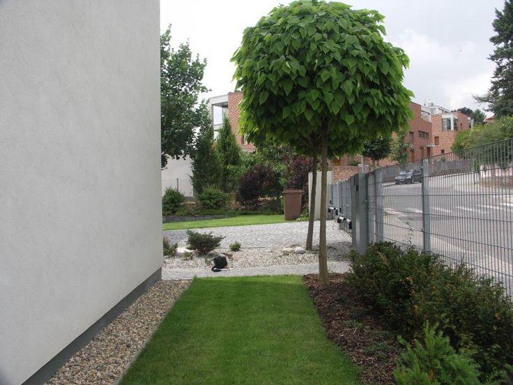 Architekt radí: Zajímavé soliterní stromy do zahrady | Magazín zahrada