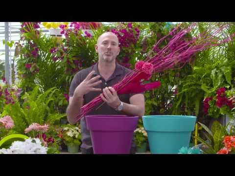 Carson Arthur shows us how to add bling to our planters!