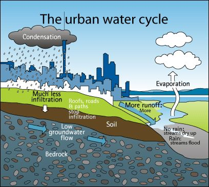 Impacts of urban development on wetlands environmental sciences essay