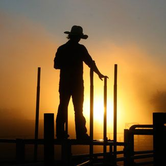 Cattle station worker