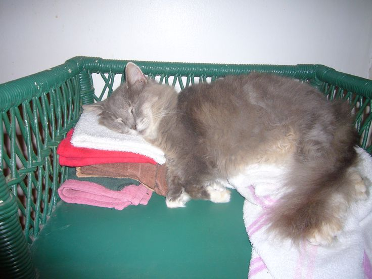 """Adopted stray cat """"Baby"""" sleeping on things she shouldn't."""