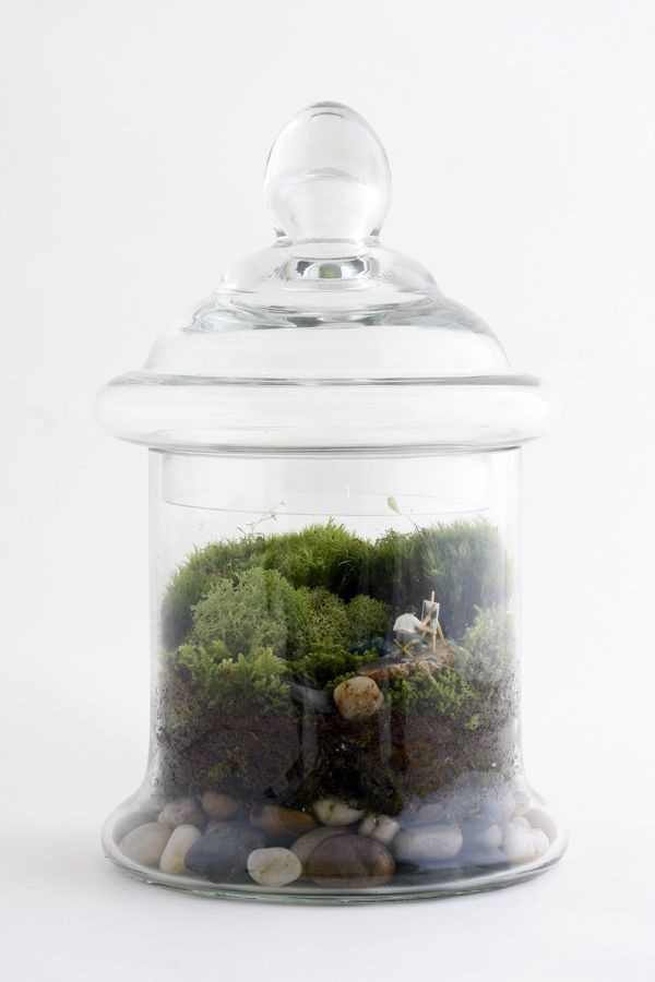 terrarium: fantastic website for ideas...very pricey moss terrariums but check out the pictures for ideas!