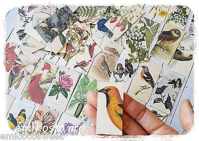 32 Vintage Bird,Flower paper ephemera,scrapbook ephemera art,Snailmails,Card