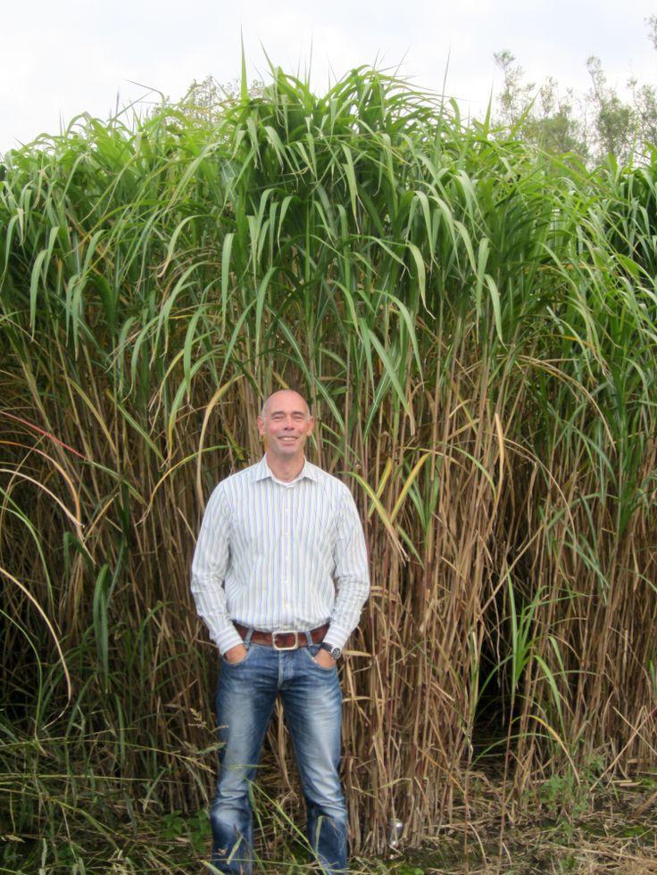 fast plants lab report