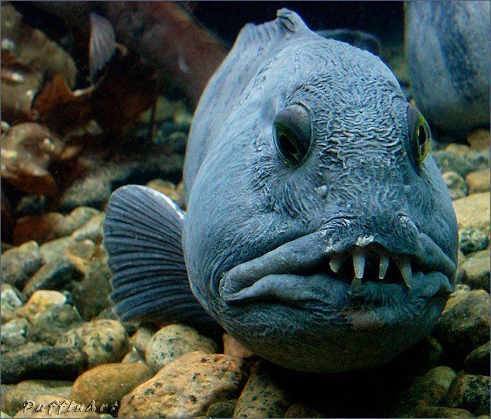 https://i.pinimg.com/736x/ca/07/ee/ca07eeebd74f4880233ed336aa4b86d0--fish-man-beautiful-people.jpg